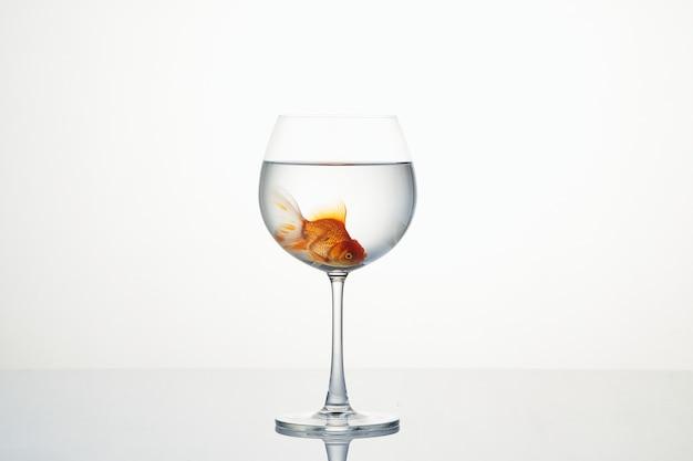 Petit poisson rouge se déplaçant dans un verre à vin d'eau