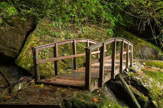 Petit pont en bois dans la forêt tropicale