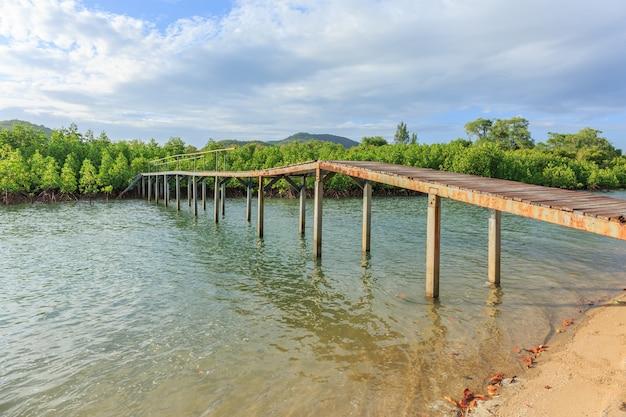 Petit pont dans la forêt de mangrove verte en journée nuageuse