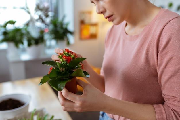 Petit pot de fleurs. gros plan d'une jeune femme aimant la plante tenant un petit pot de fleurs avec des fleurs rouges