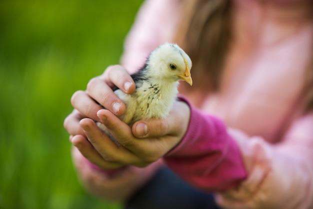 Petit poulet dans les mains des enfants sur la nature