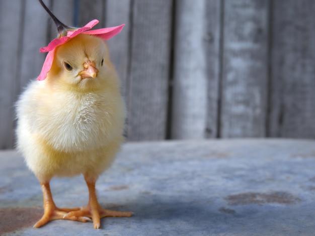 Petit poulet avec une fleur.