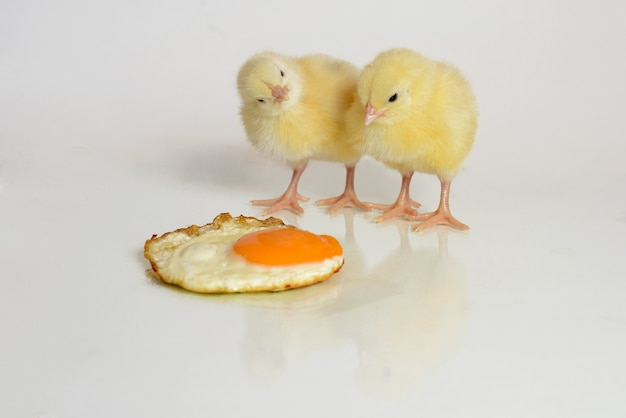 Petit poulet regarde les œufs au plat, isolé sur blanc
