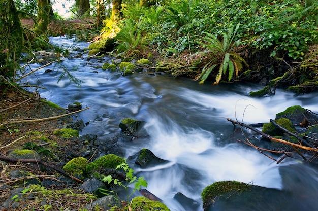 Petit ruisseau mossy