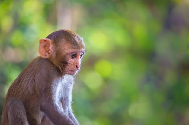 Petit singe avec fond