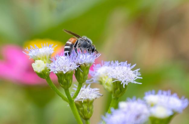 Petite abeille sur la fleur violette