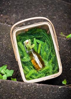 Petite bouteille de sirop contre la toux fait maison à base de cimes de sapin dans un panier avec de jeunes bourgeons de pin verts