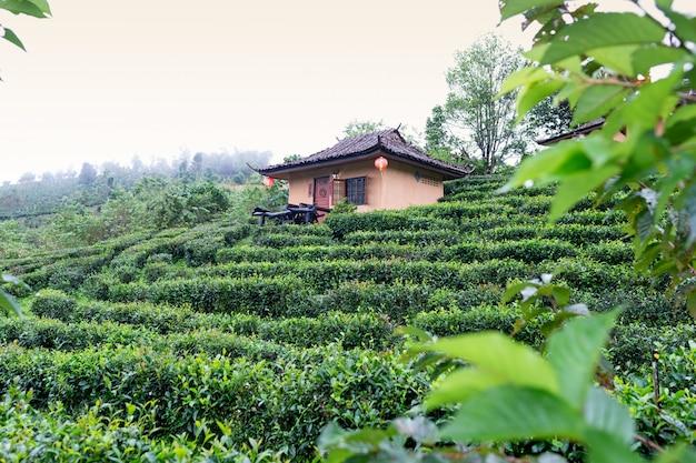 Petite cabane dans la plantation de thé de mae hong son