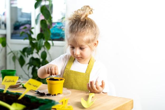 Une petite fille blonde dans un tablier est engagée dans la plantation de graines pour les semis, souriant, le concept de jardinage des enfants.