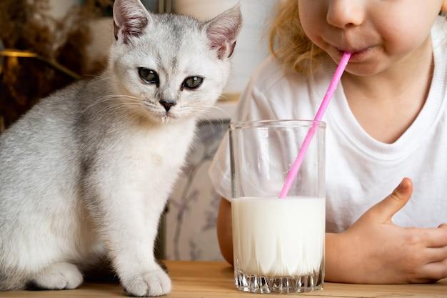 Une petite fille blonde est assise à une table avec un chaton écossais blanc et boit du lait dans un verre