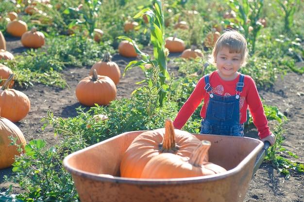 Petite fille avec une brouette et des citrouilles au champ de la ferme