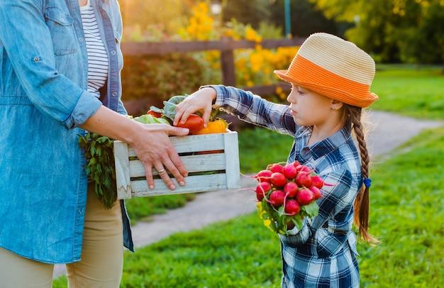 Petite fille cueillir des légumes dans un panier avec sa mère