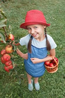 Une petite fille dans un tablier bleu se tient avec un panier à la main et déchire des pommes d'une branche