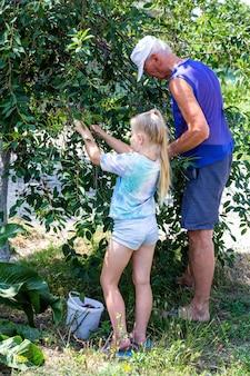 La petite-fille et le grand-père cueillent des baies de cerise mûres d'un arbre dans le jardin un jour d'été
