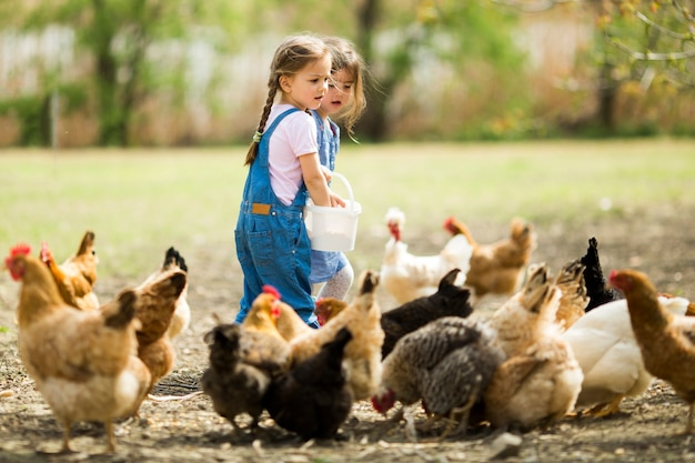 Petite fille à nourrir les poulets
