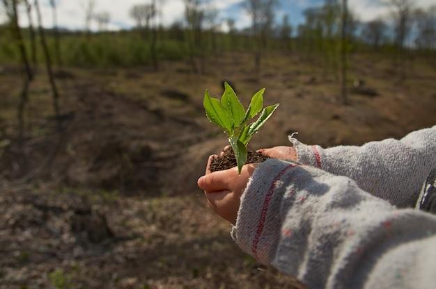 Petite fille plantant un jeune arbre, concept sauver le monde. jeune plante dans les mains à l'extérieur. concept d'écologie