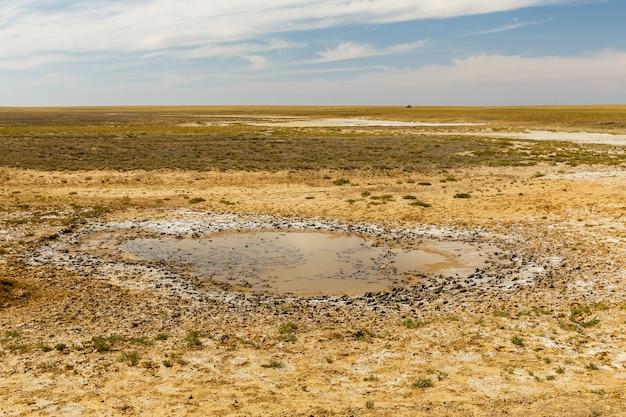 Petite flaque d'eau dans la steppe par une journée ensoleillée, kazakhstan