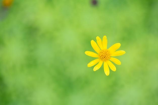 Petite fleur étoile jaune au flou artistique