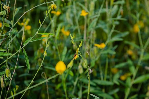 Petite fleur jaune dans le jardin