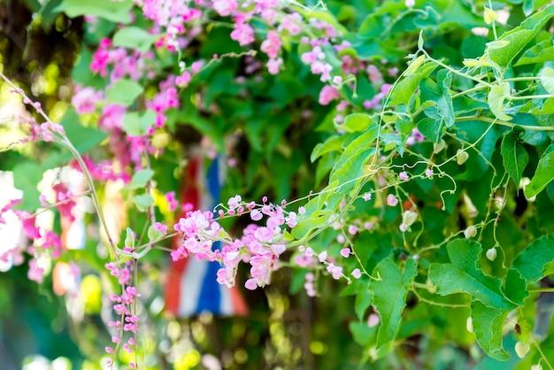 Petite fleur rose avec petit flou d'abeille