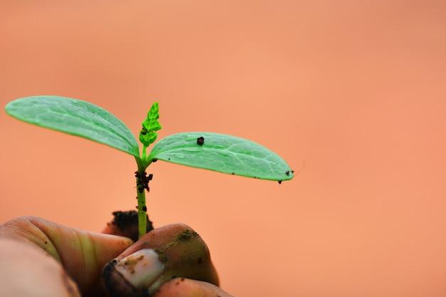 Petite graine sur place prête à planter