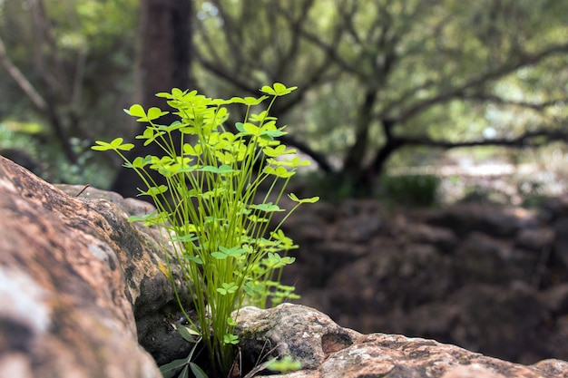 Petite grappe de végétation dans la forêt
