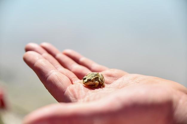 Petite grenouille est assise sur ma main