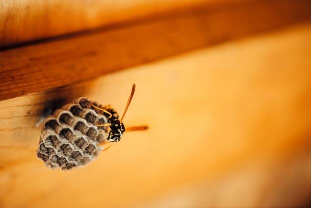 Une petite guêpe protège sa macro en nid d'abeilles.
