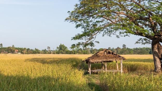 Petite hutte et terrain de golf doré.