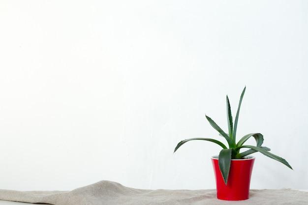 Une petite plante d'agave dans un pot rouge se dresse sur un tissu naturel sur une console blanche en face du mur blanc