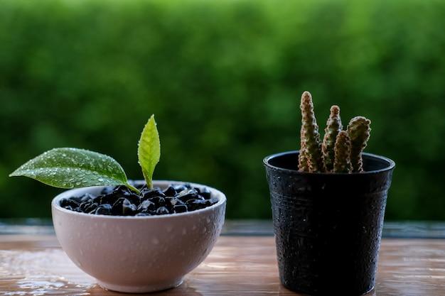 Petite plante et cactus