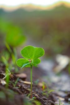 Petite plante de coton, born concept
