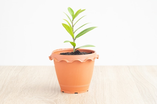 Petite plante dans un pot marron