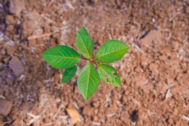 Petite plante dans la terre