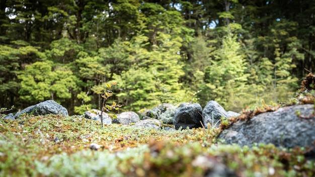 Petite plante gros plan tourné à kepler track fiordland national park nouvelle-zélande