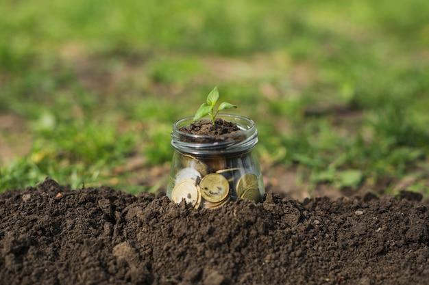 Petite plante avec des pièces de monnaie
