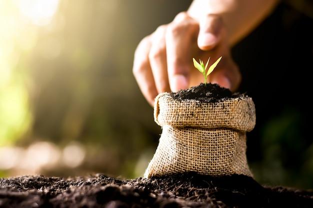 Petite plante poussant dans un sac en tissu