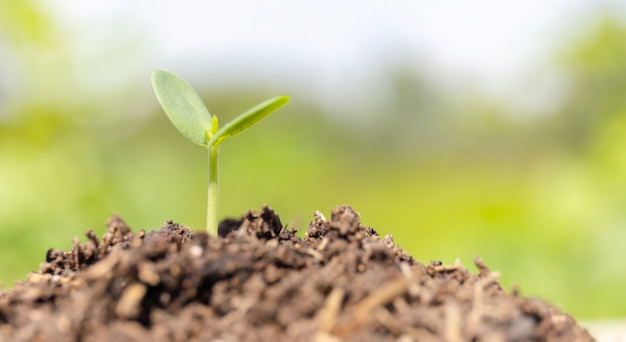 Petite plante poussant dans le sol avec arrière-plan flou