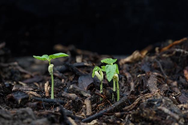 Petite plante poussant hors du sol en milieu naturel après la pluie