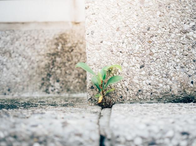 Petite pousse forte poussant dans le coin du sol en béton.