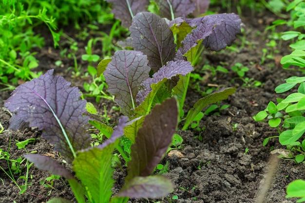Petite pousse de printemps dans la ferme horticole. concept d'une vie verte. contexte de l'écologie et de l'environnement.