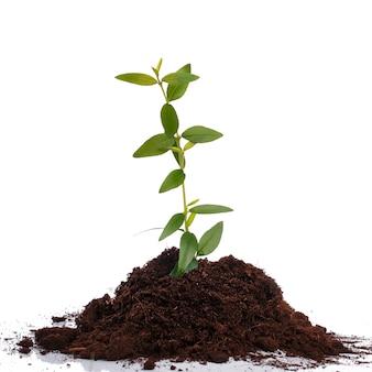 Petite pousse verte dans le sol