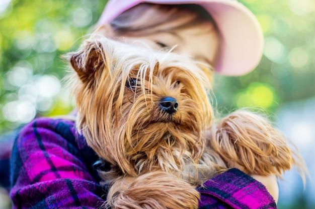 Petite race de chien yorkshire terrier aux mains de la jeune fille