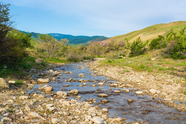 Petite rivière dans les hauts plateaux