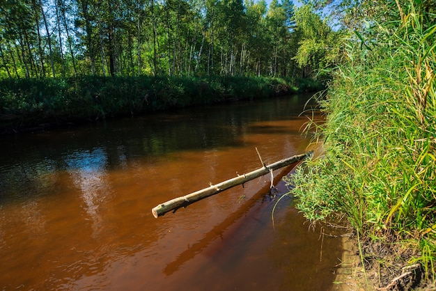 Petite rivière en forêt en journée ensoleillée. eau brune avec espace de copie. nature incroyable au soleil.