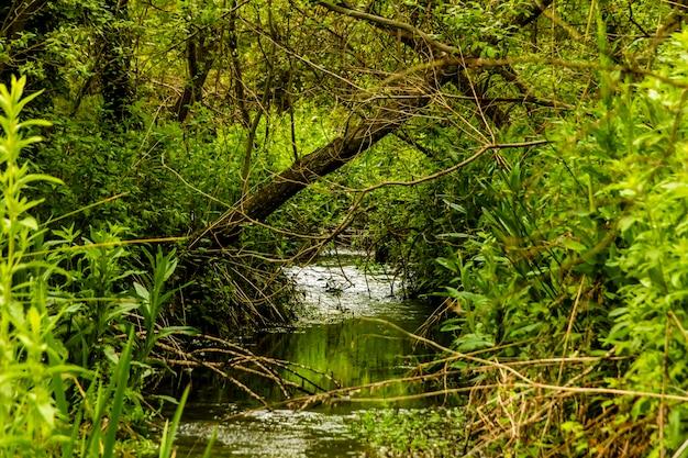 Petite rivière parmi la végétation de la ville de banyeres de mariola, rivière vinalopã, alicante.