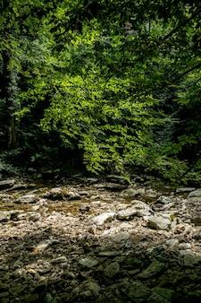 Petite rivière et rochers belle cascade de forêt tropicale de montagne avec de l'eau et des rochers à écoulement rapide