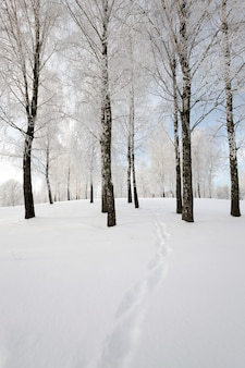 La petite route photographiée en hiver