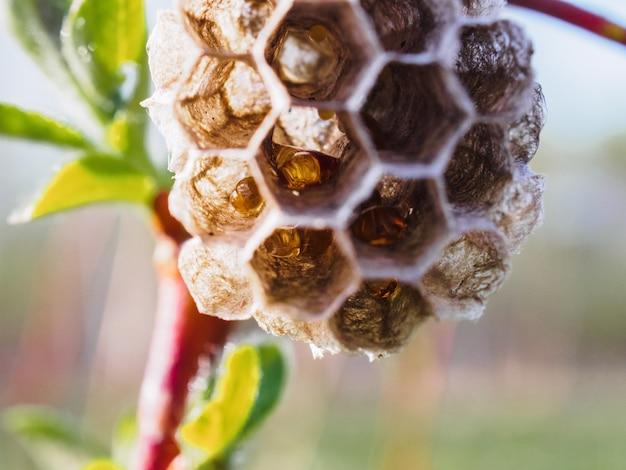 Petite ruche de guêpes sur une branche