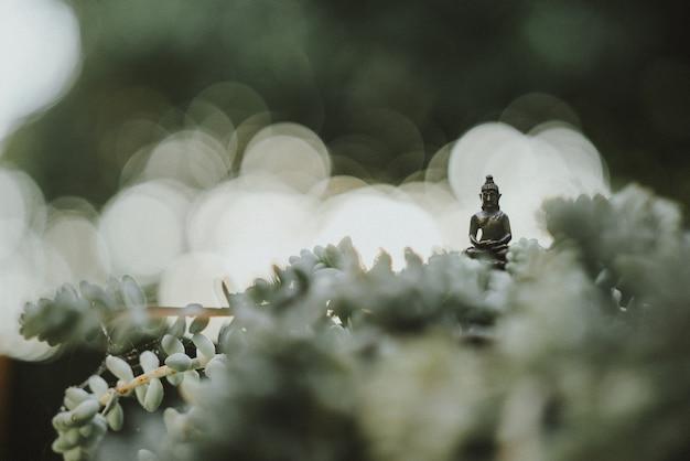 Petite statue de bouddha au milieu d'un plan de cactus dans le jardin